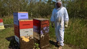 HoneyBees Hive