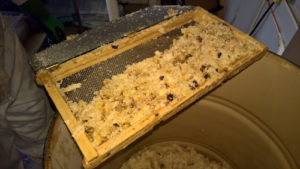Cappings after Extraction