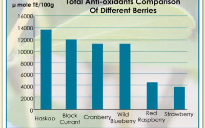 Haskap berries and anti-oxidants