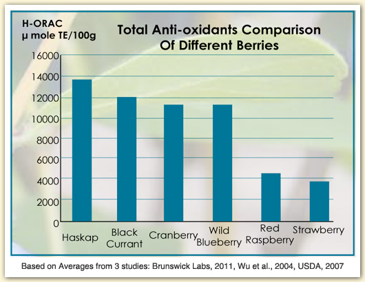 haskap anti-oxidant